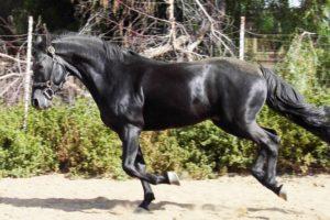 ninja-stallion